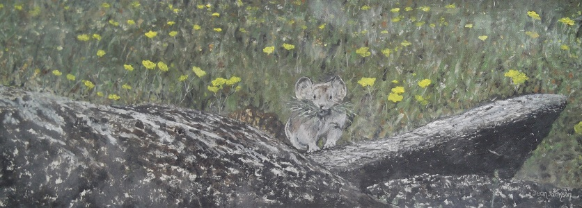 North American Pika Oil on canvas 76cmW X 21cmH X 3.5cmD $490