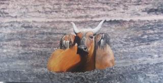 The Holy Cow Oil on canvas 51cmW X 25cmH X 3.5cmD $490