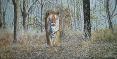On the Prowl W 51cm H 25cm D 3.5cm Oil on Canvas $350
