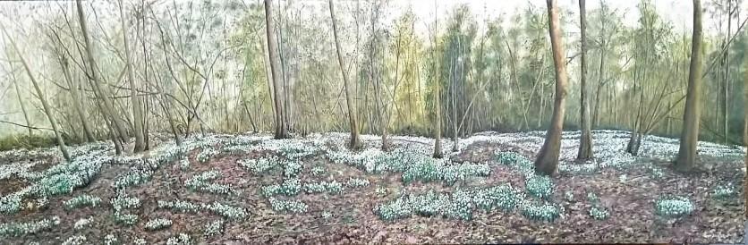 Snowdrop Wood Oil on Canvas 152 Cm W X 50 Cm H $950
