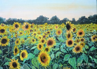 Sunflower Harvest Oil on Canvas 25cm W X 20cm H $190